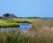 Ecology Park - Hatteras Island Ocean Center