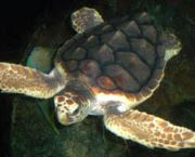 Turtle Talks on Pea Island - Pea Island National Wildlife Refuge