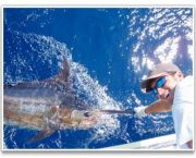 Offshore Fishing With Bite Me Sportfishing - Bite Me Sportfishing Charters