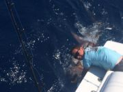 Reliance Hatteras Fishing Charters, Reliance offshore fishing 5/25