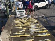 Calypso Sportfishing Charters, Excellent fishing!