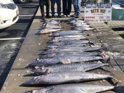 Bite Me Sportfishing Charters, Spearfish Wahoo Tuna King Mackerel