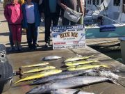 Bite Me Sportfishing Charters, Easter Blue Marlin, and tunas, wahoos, and dolphins!
