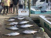 Bite Me Sportfishing Charters, Tuna and a Wahoo