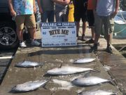 Bite Me Sportfishing Charters, Blackfin dolphin skipjack amberjack barracuda