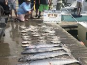 Bite Me Sportfishing Charters, Wahoos, dolphin and Triggers
