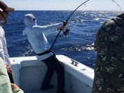 Tuna Duck Sportfishing, Bluefin Tuna Action