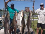 Oden's Dock, Free Agent Slays the Cobia!