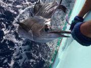 Reliance Hatteras Fishing Charters, Reliance Sailfish and Mahi