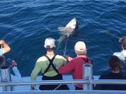Tuna Duck Sportfishing, Jigging and Popping For Bluefin Tuna