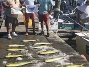 Bite Me Sportfishing Charters, Sailfish Dolphin Tuna!