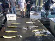 Bite Me Sportfishing Charters, Anticipointment!
