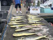 Bite Me Sportfishing Charters, Wahoo Dolphin King