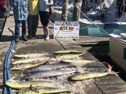 Bite Me Sportfishing Charters, Wahoo Dolphin and cobia huntin!