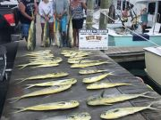 Bite Me Sportfishing Charters, Good Dolphin Fishing - Gaffers