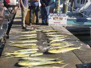 Bite Me Sportfishing Charters, Gaffer Dolphin and Tuna!