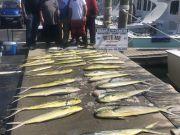 Bite Me Sportfishing Charters, Good dolphin fishing!