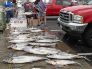 Bite Me Sportfishing Charters, Live Bait Action