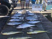 Bite Me Sportfishing Charters, Tuna! Tuna! Tunas and dolphin!