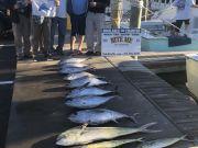 Bite Me Sportfishing Charters, Tuna!  Dolphin!  Sailfish!