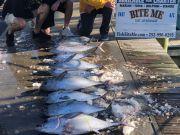 Bite Me Sportfishing Charters, blackfins