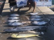 Bite Me Sportfishing Charters, Fall Meat Slam, with a sailfish and a citation blackfin