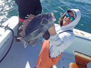 Tuna Duck Sportfishing, Sea Bass