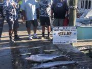 Bite Me Sportfishing Charters, Quality and Quantity