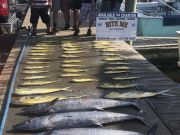 Bite Me Sportfishing Charters, Meat Slam!