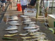 Bite Me Sportfishing Charters, Tuna and Dolphin!